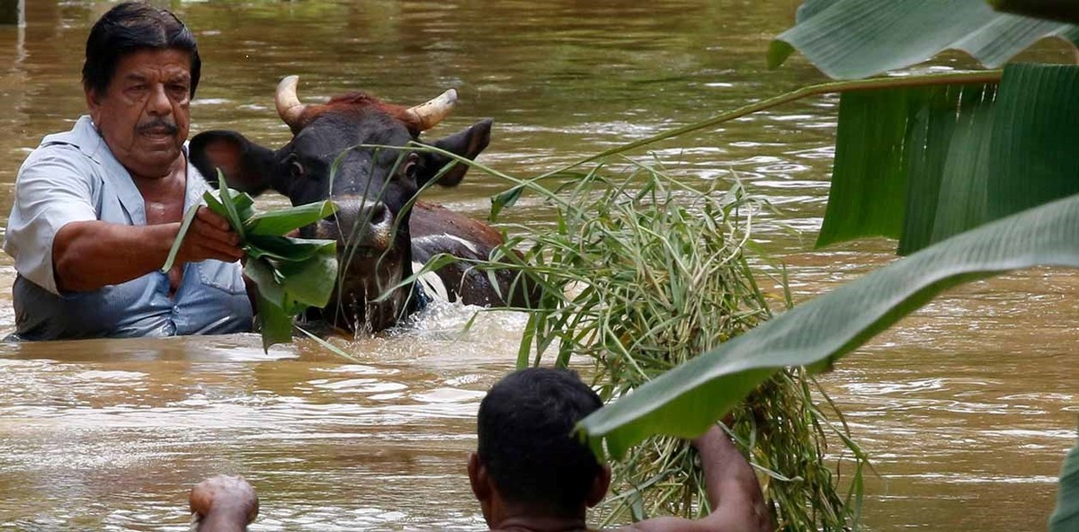 VIDEO. Asciende a 21 los fallecidos por inundaciones monzonicas en Sri Lanka