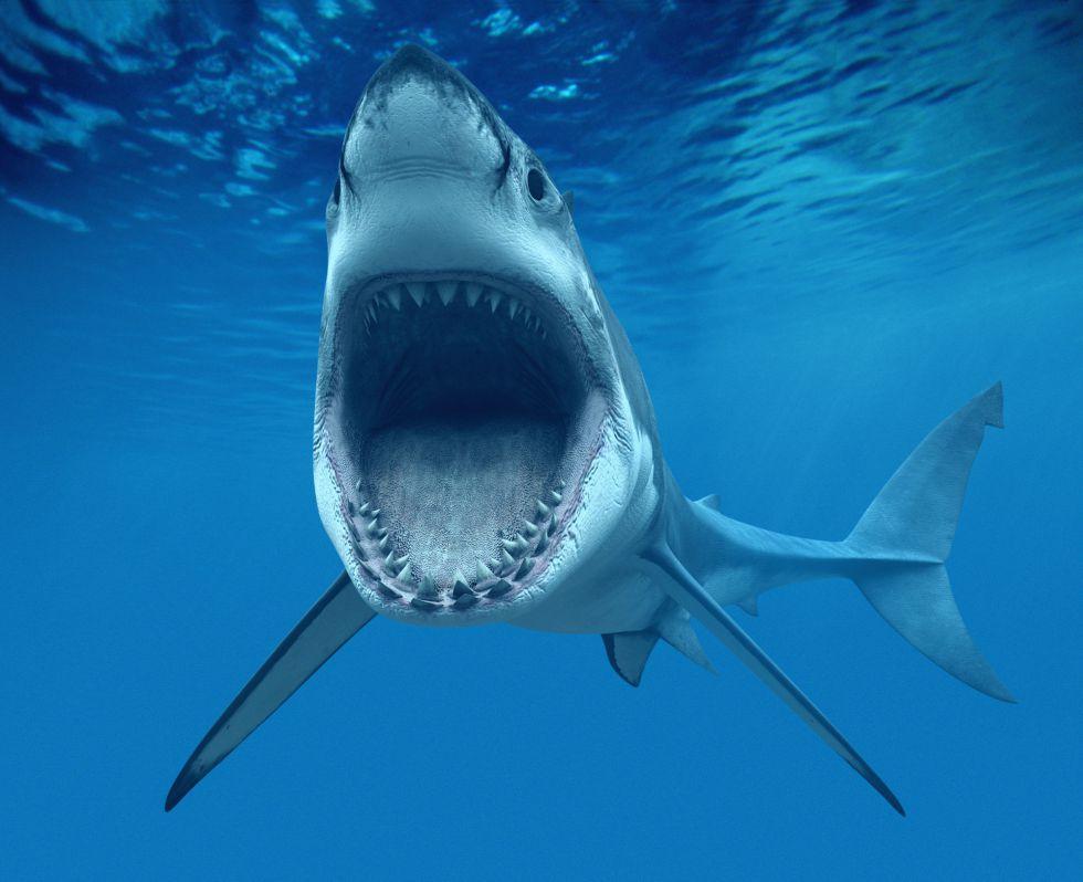 Video Fuerte. Esto encontraron en el estómago de este tiburón