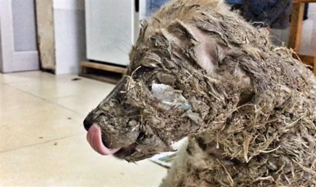 Perro es torturado por dos niños y sufre grandes consecuencias