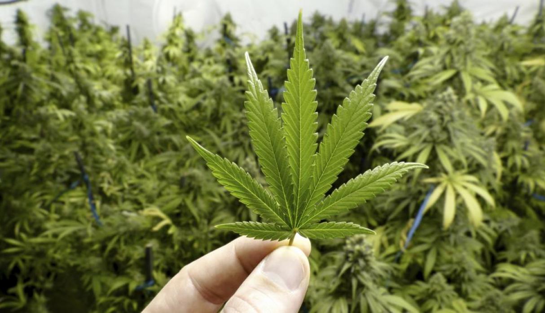 EEUU Aprueba el primer medicamento proveniente de la Marihuana