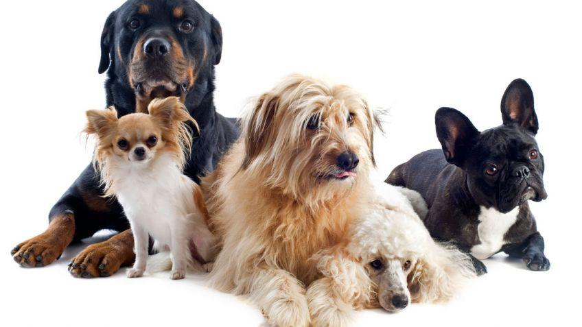'VIDEO' La reacción de diferentes perros al sus amos desaparecer delante de ellos