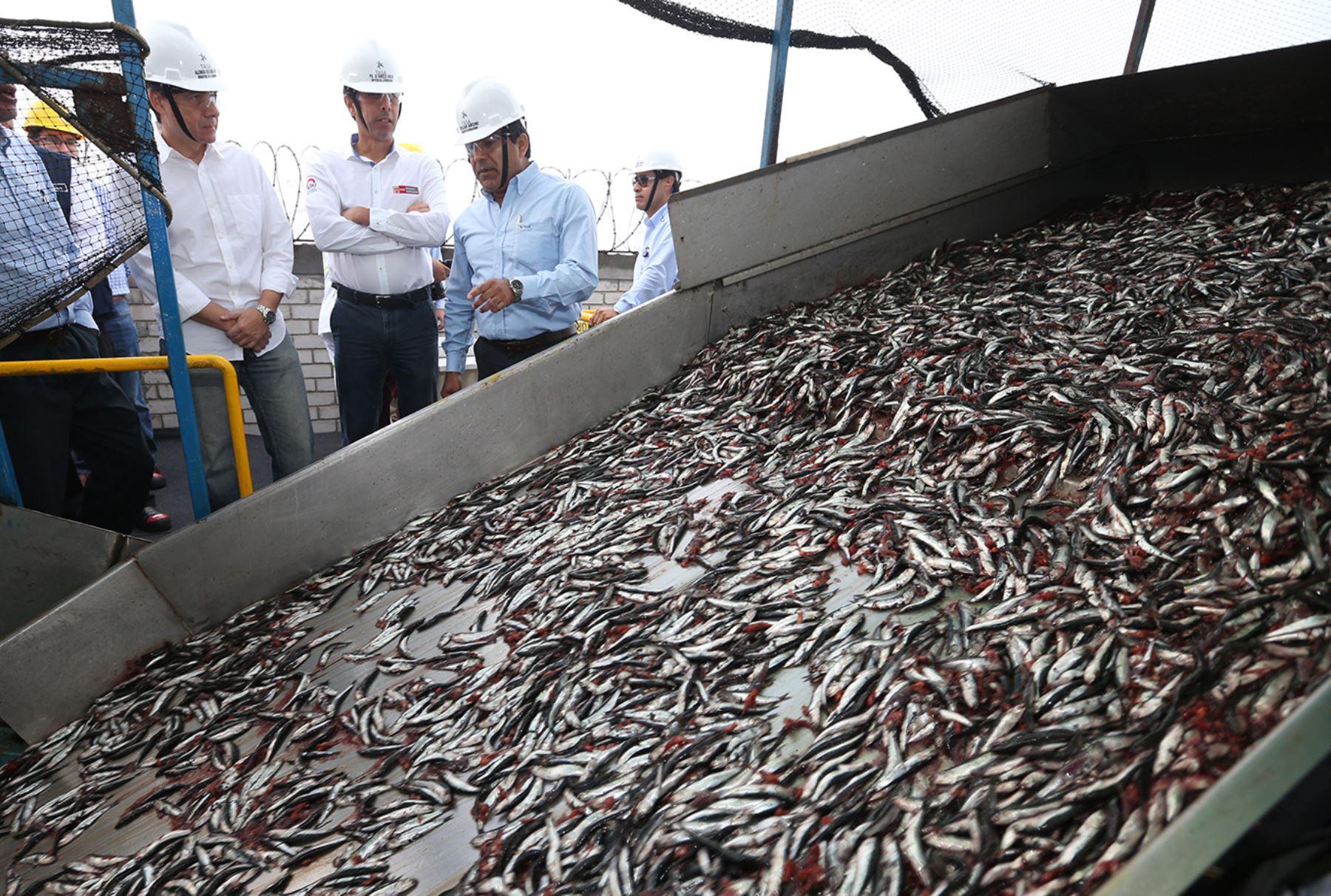 La pesca en el mes de abril habría aumentado considerablemente la economía peruana