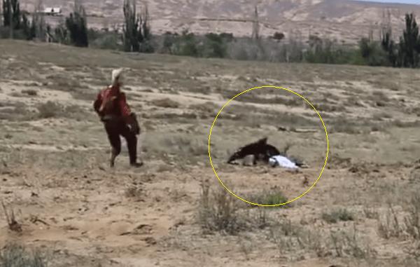 VIDEO.Tragedia en Kirguistán un águila real se lanza sobre una niña de 8 años.