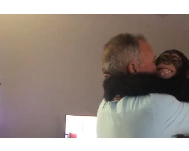 'VÍDEO' La alegría de un chimpancé cuando vio otra vez a sus antiguos cuidadores