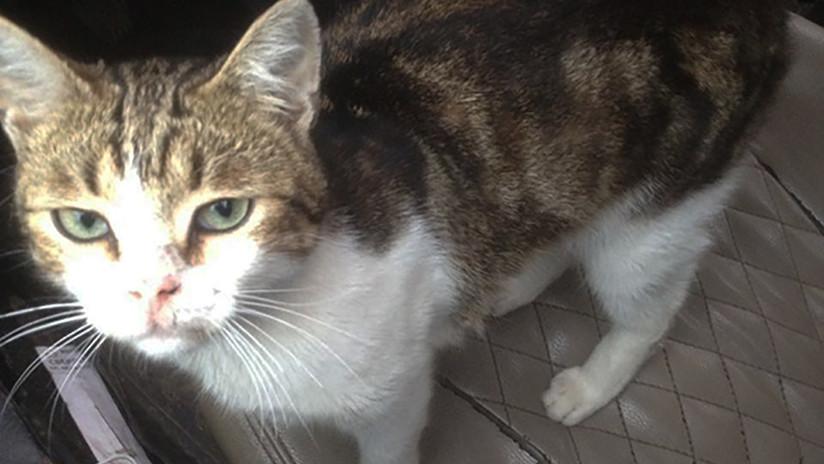 Gato es atrapado contrabandeando droga en cárcel Rusa.