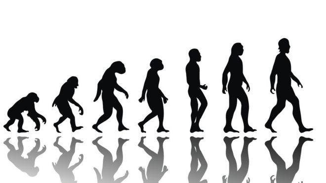Lo que los científicos nos mintieron sobre la evolución