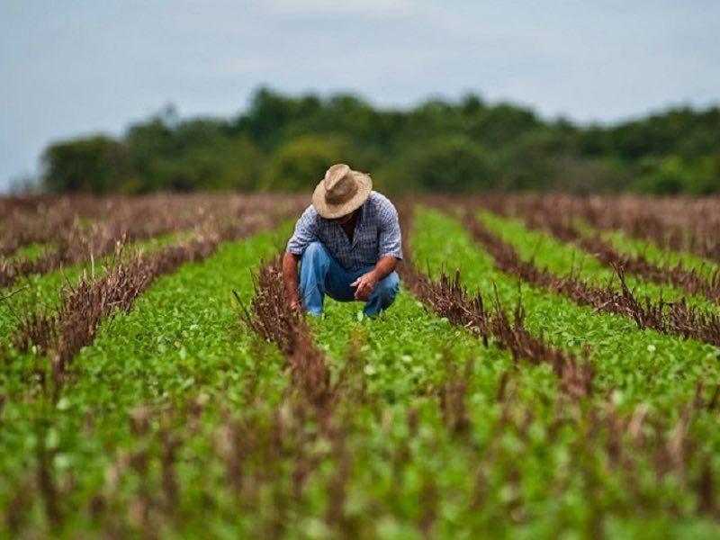 Perú. Solo es aprovechado el 10% del terreno apto para la agricultura