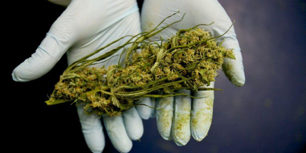Existencias del cannabis superan al oro y al bitcoin