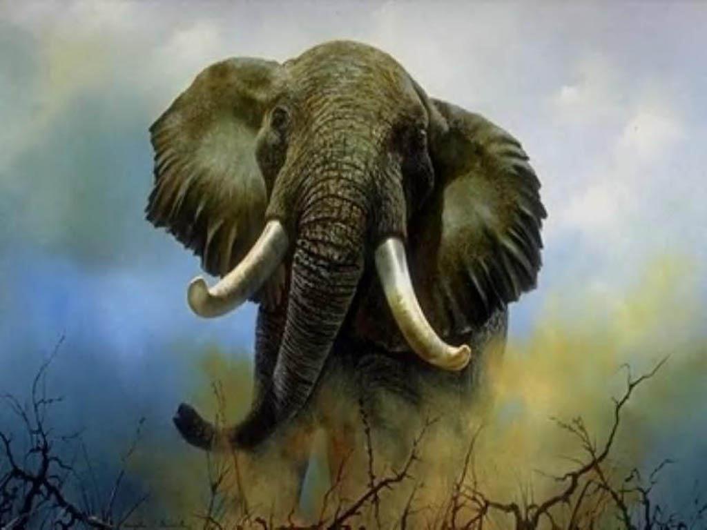 VIDEO. Cazadores le disparan a elefante y desatan la furia de sus compañeros