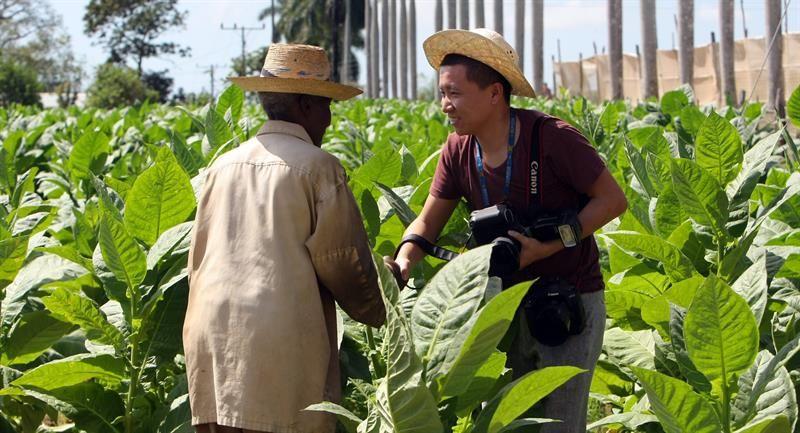 Cultivar tabaco es perjudicial para el medio ambiente.