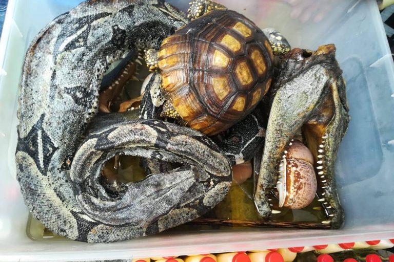 La cruel y desgarradora realidad del tráfico de fauna peruana. FOTOS