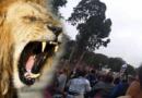 Venezolanos generan pánico en el Parque de la Leyendas para robar a los asistentes. VIDEO
